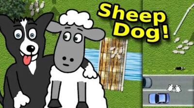 Sheep Dog!